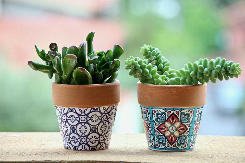 Fat Plants, Pots, Plant, Leaf, Food, Garden, Nature