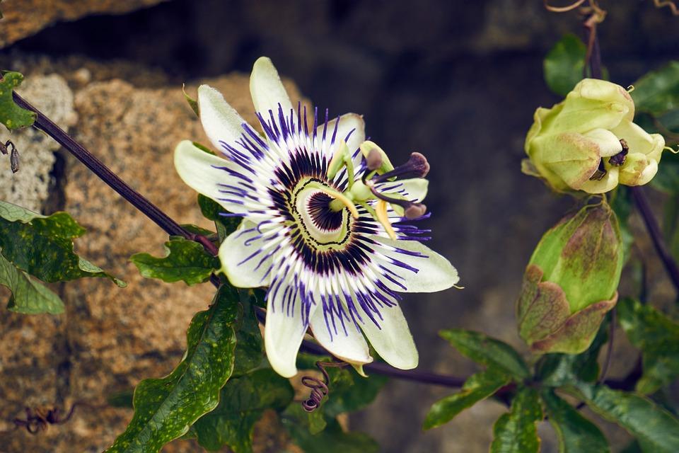 Nature, Flower, Plant, Leaf, Garden, Outdoor, Color