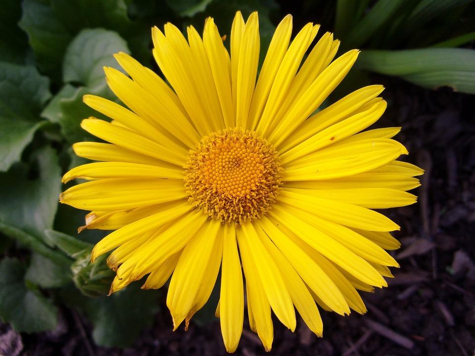 Flower, Garden, Yellow, Nature, Spring, Petals, Plant