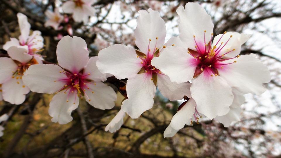 Flower, Plant, Nature, Fulfillment, Petal, Garden
