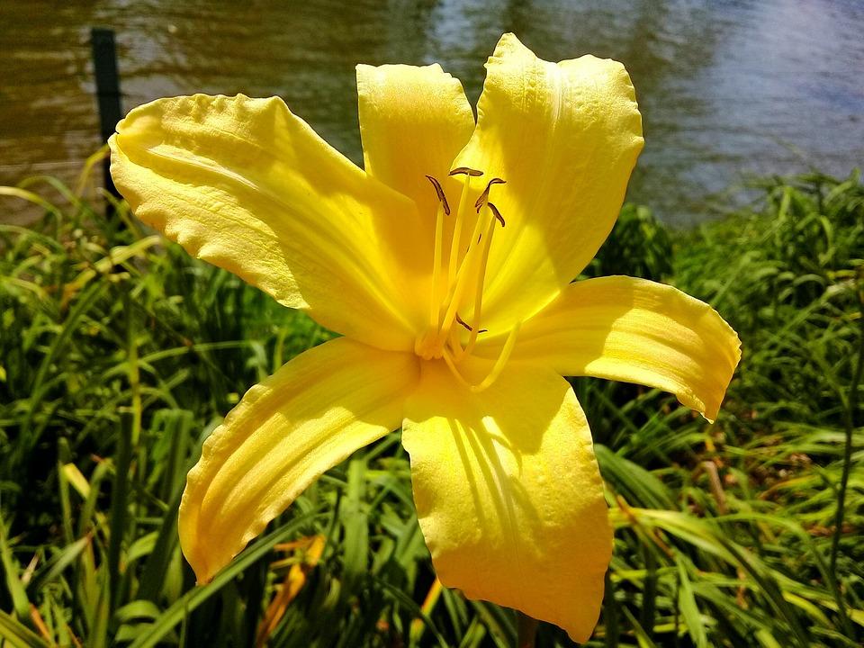 Nature, Flower, Summer, Plant, Garden, Petal, Yellow
