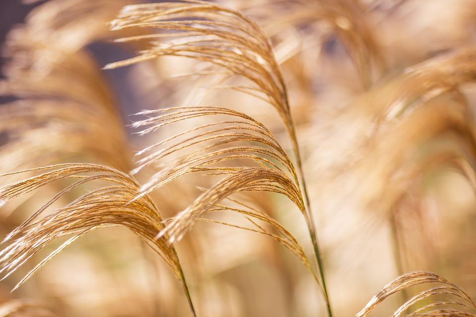 Grasses, Wind, Plant, Garden, Summer, Blades Of Grass