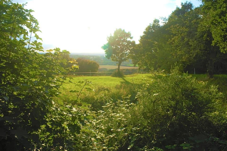 Garden, Plants, Trees, Green, Nature, Landscape, Light