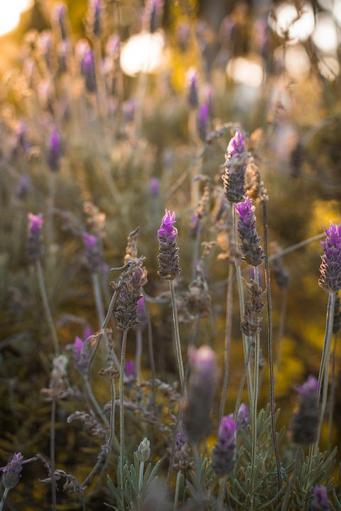 Plants, Nature, Plant, Flower, Garden, Flowers, Spring