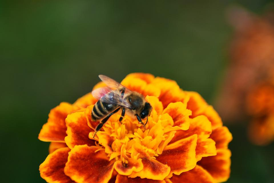 Wasp, Flower, Garden, Bloom, Pollination, Animal, Plant