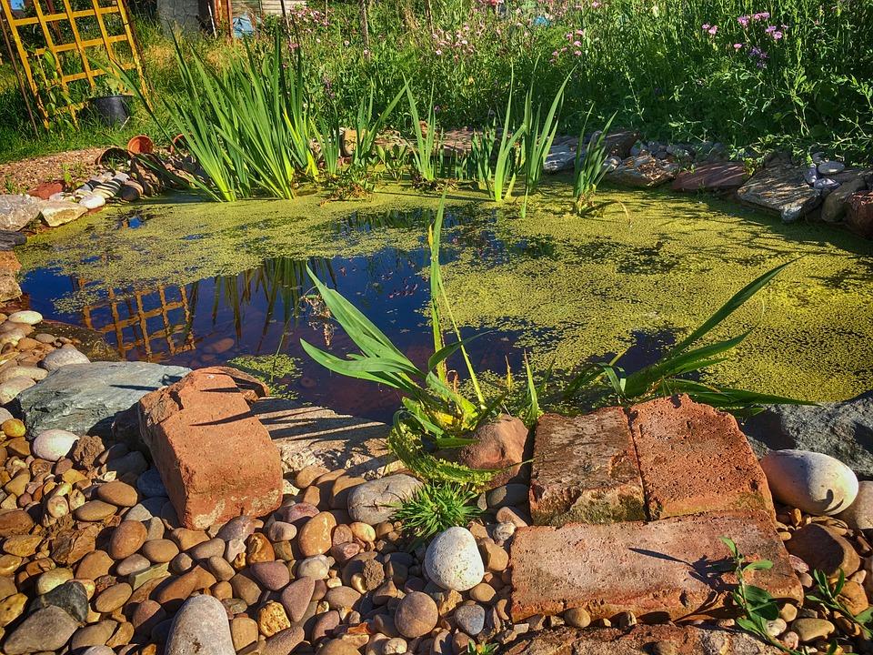 Pond, Water, Nature, Plant, Garden