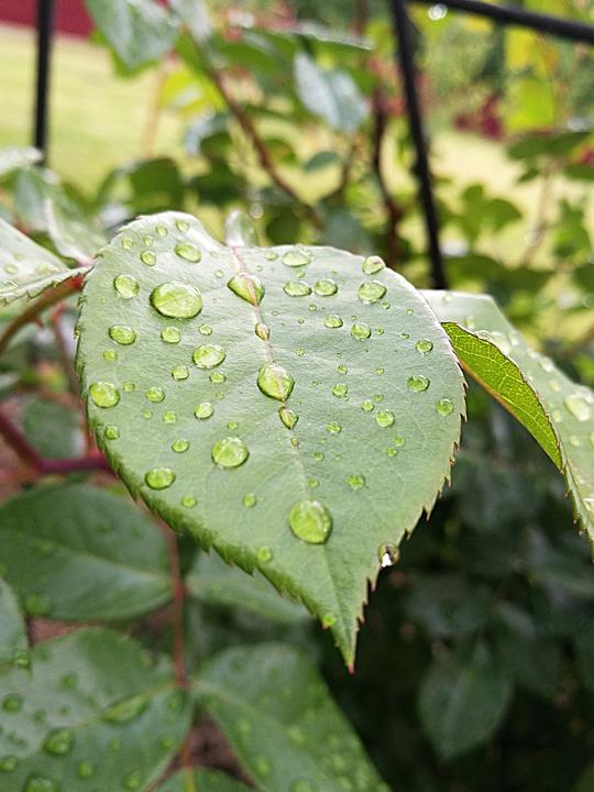 Drops, Water, Rain, Leaves, Garden, Drops Of Water