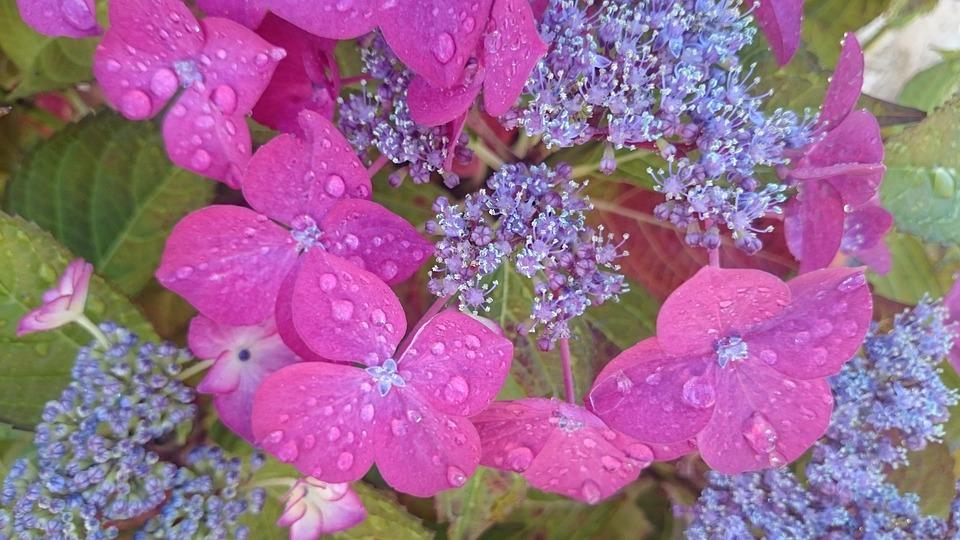 Nature, Flower, Rain, Garden
