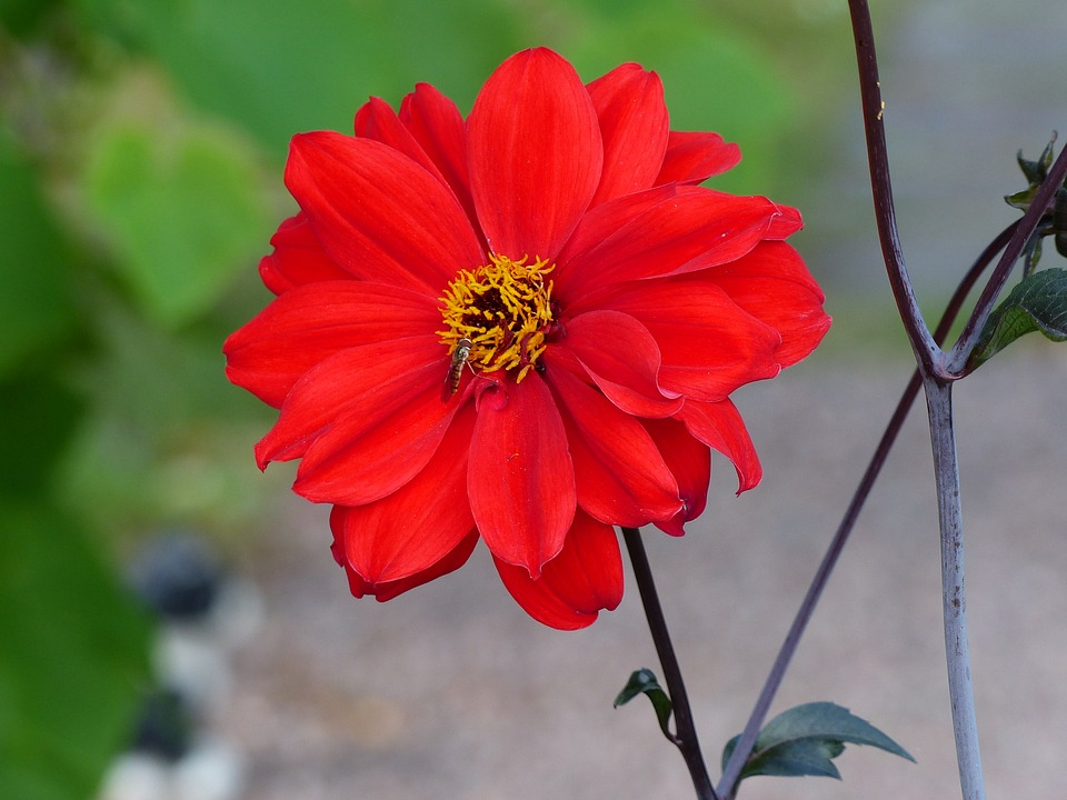 Flower, Red, Insect, Leaf, Green, Summer, Garden