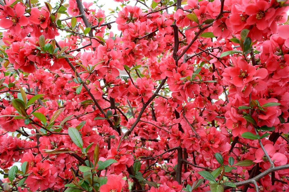 Nature, Summer, Summer Plants, Flower, Garden, Red