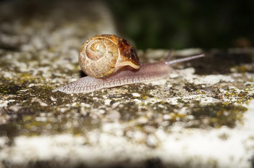 Snail, Slow, Steady, Shell, Garden, Slimy