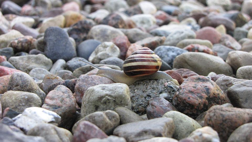 Stones, Snail, Shell, Close, Nature, Animal, Garden
