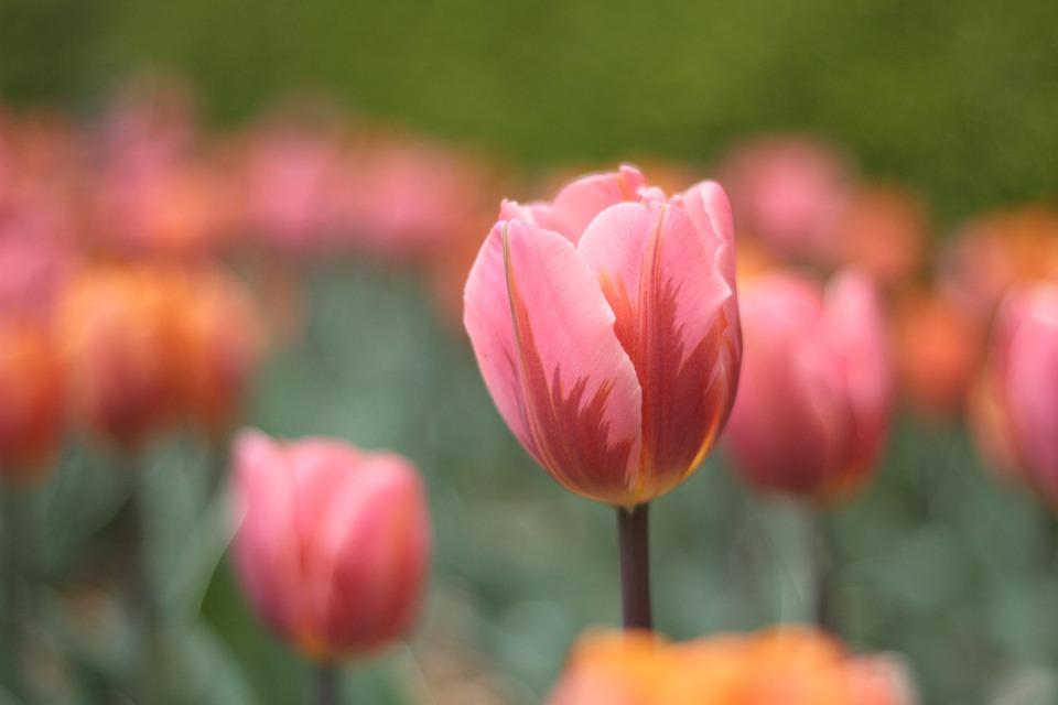 Flower, Garden, Spring
