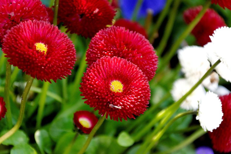 Spring, Flowers, Flower, Garden