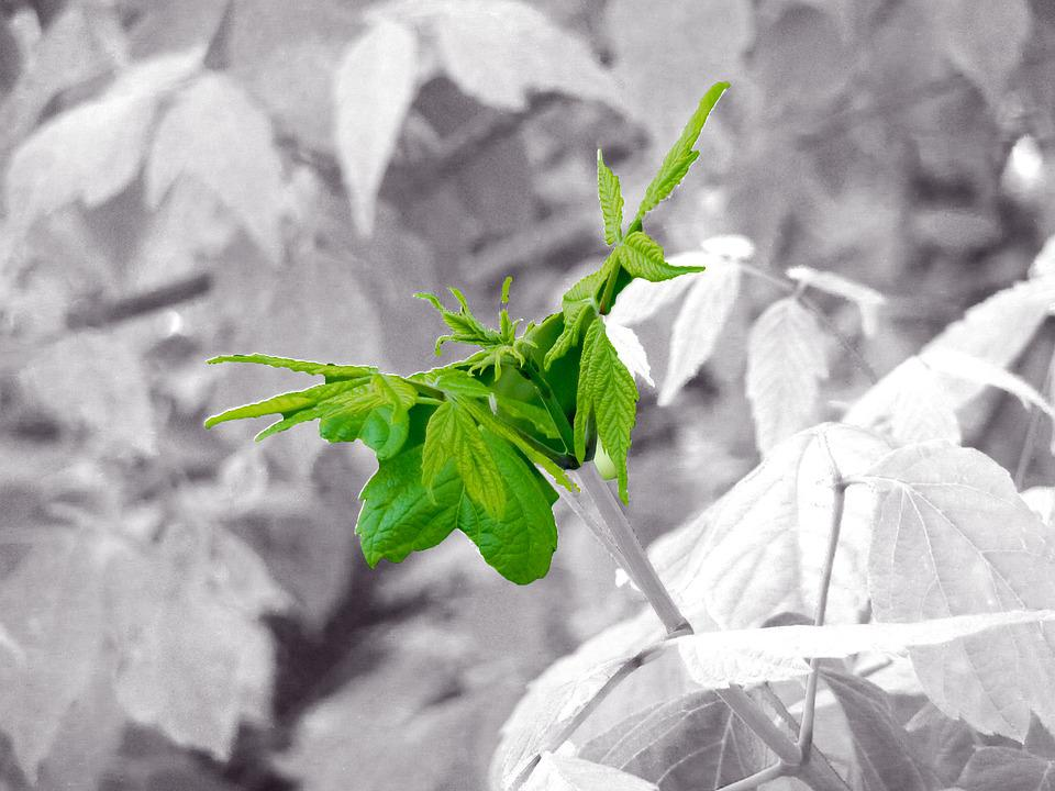 Green, Fresh Green, Spring, Plant, Garden, Fresh
