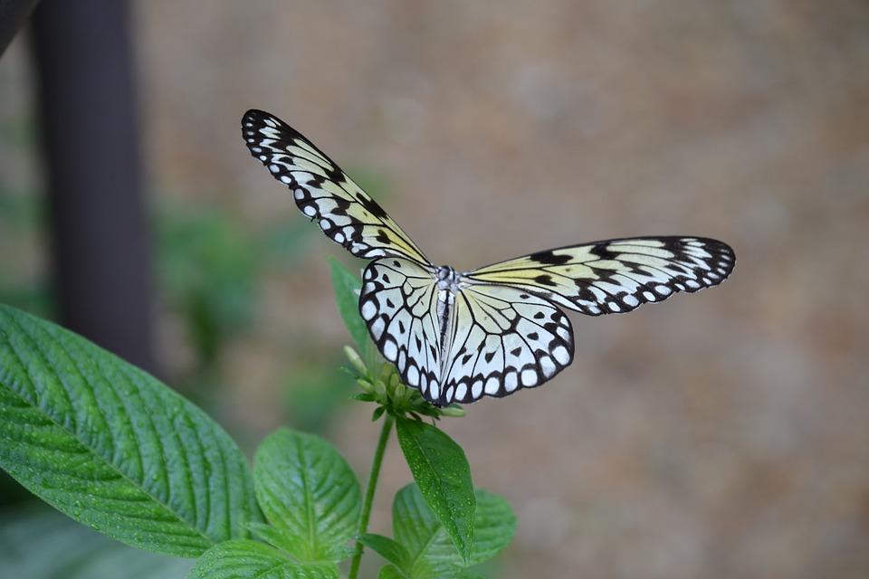 Butterfly, Nature, Spring, Garden