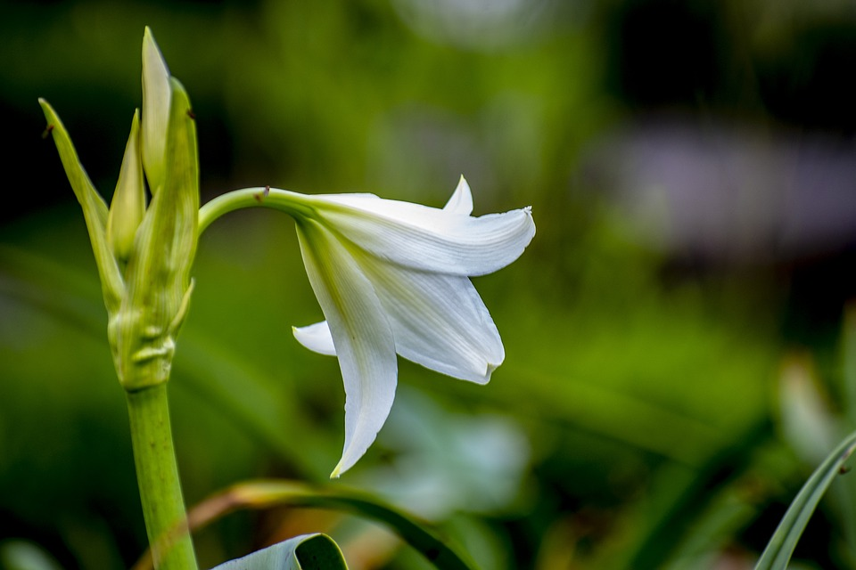 Nature, Flower, Spring, Plant, Garden