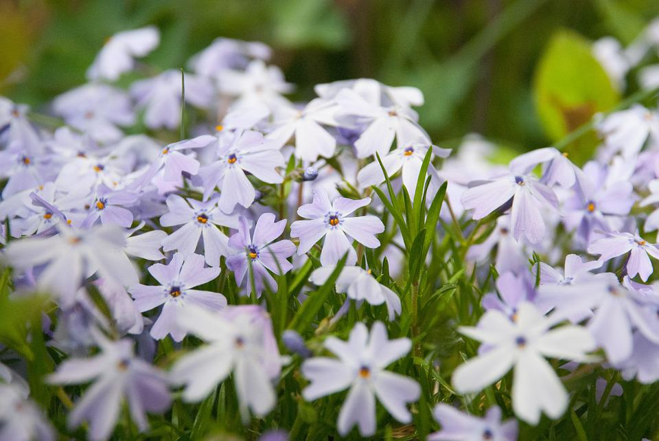 Flowers, Spring, Garden, Summer, Violet, Meadow