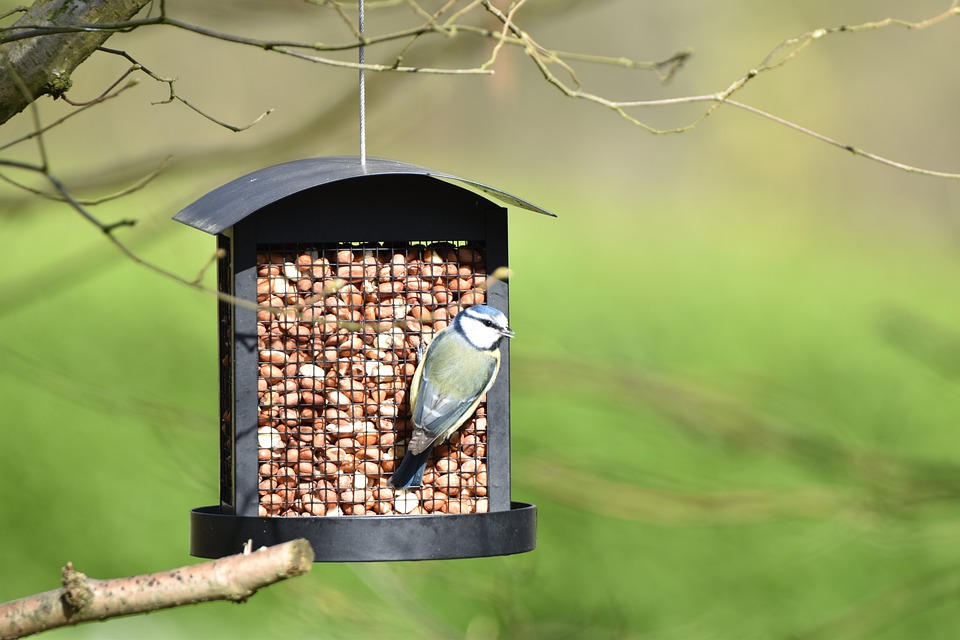 Tit, Bird, Nature, Plumage, Spring, Garden, Pen, Birds