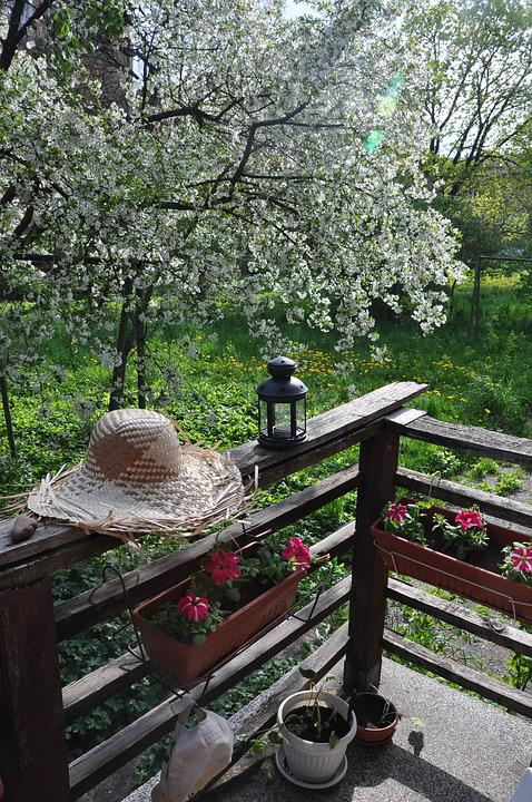 Spring, Shifnal Cherry, Straw Hat, Garden