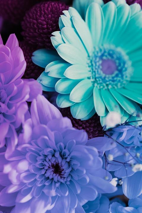 Flower, Macro, Spring, Garden, Butterfly, Drop, Summer
