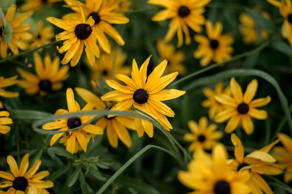 Flower, Summer, Flora, Nature, Garden, Floral, Blooming