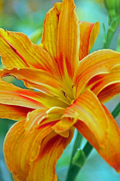 Flower, Yellow, Yellow Flower, Summer, Garden, Plant
