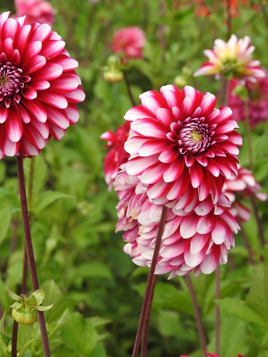 Flowers, Summer Flowers, Garden