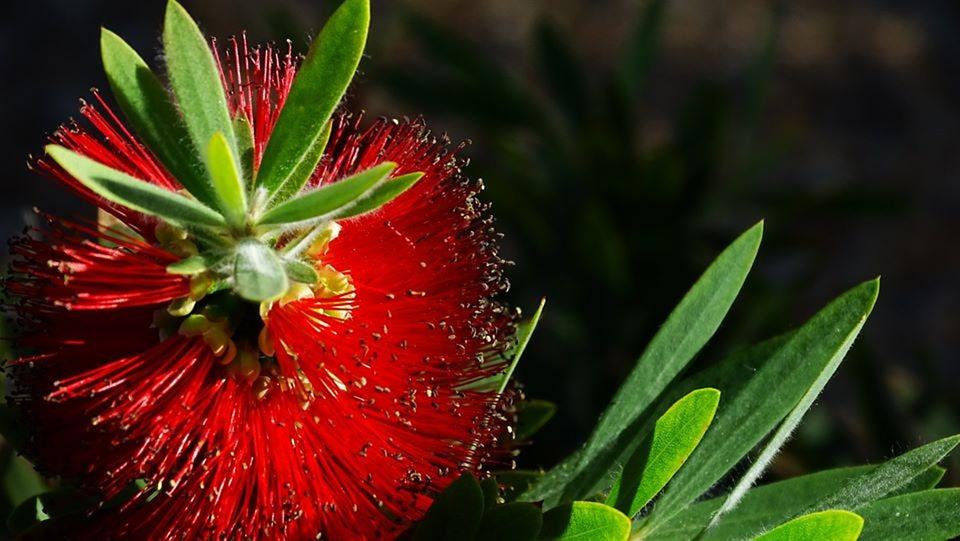 Red, Flower, Garden, Nature, Summer, Color, Arizona