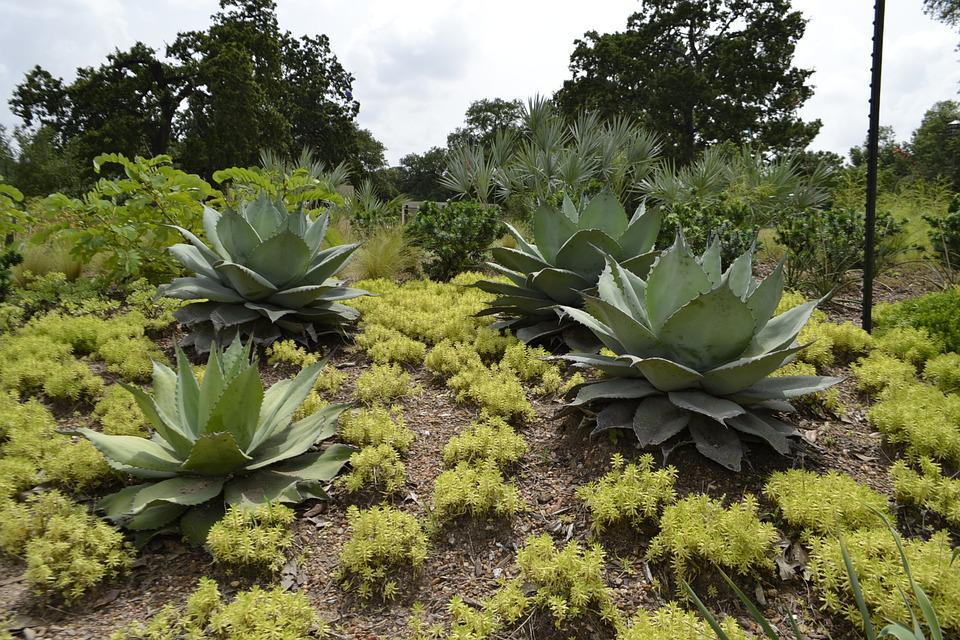 Houston Botanical Gardens