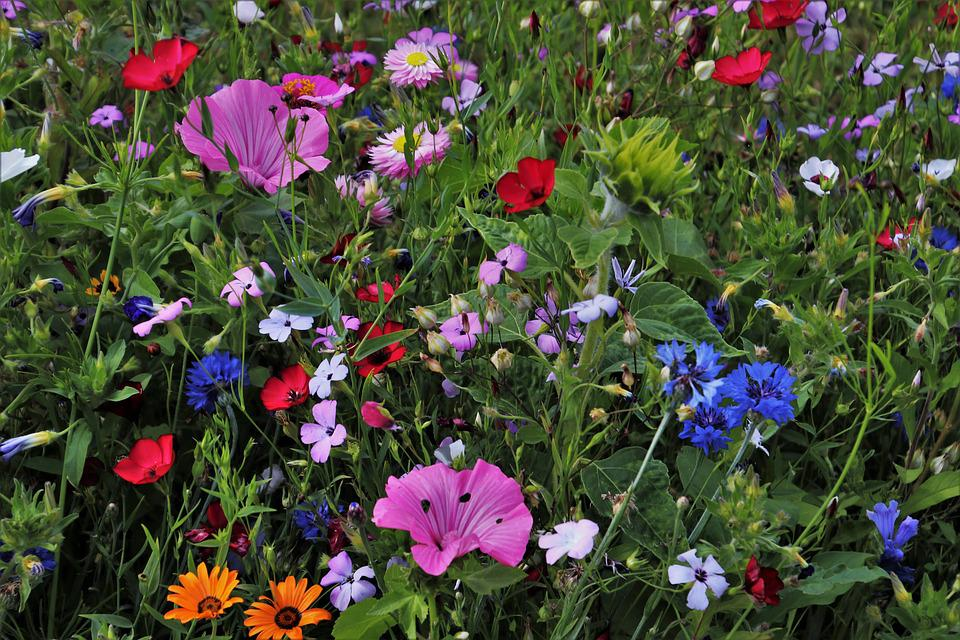 Flowers, Meadow, Garden, The Beasts Of The Field, Plant