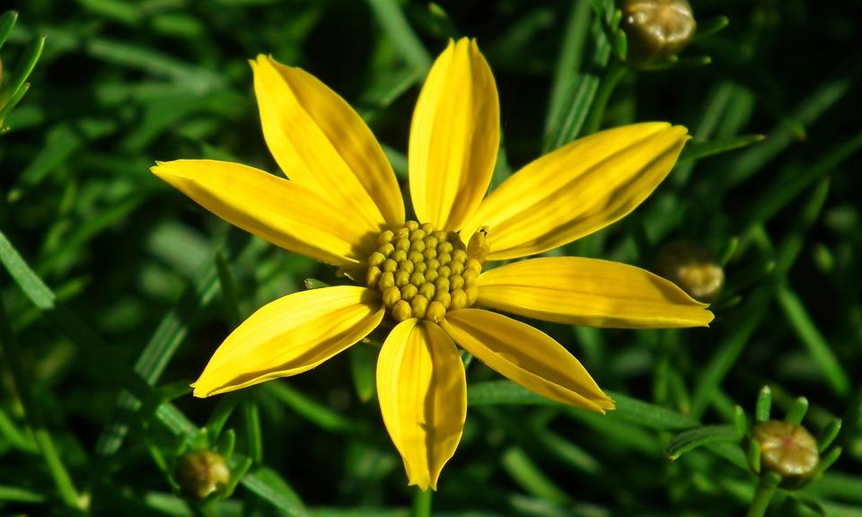 Flower, Yellow, Summer, Garden, The Petals, Nature