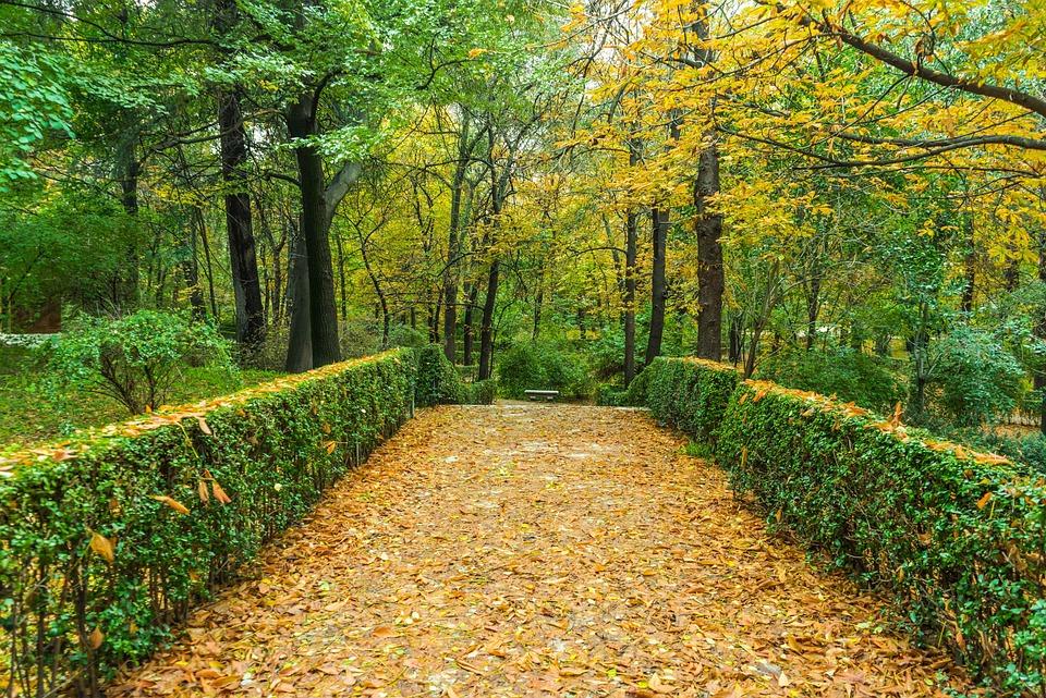 Autumn, Green, Garden, Nature, Leaves, Landscape, Trees