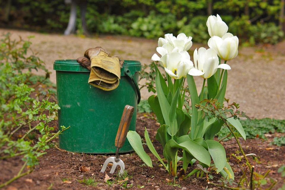 bucket gardening. Garden, Gardening, Garden Tools, Bucket, Plant, Tulips Bucket Gardening R