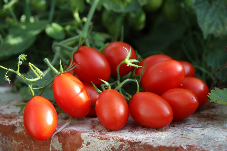 Tomatoes, Vegetables, Garden, Food, Healthy, Fresh, Red