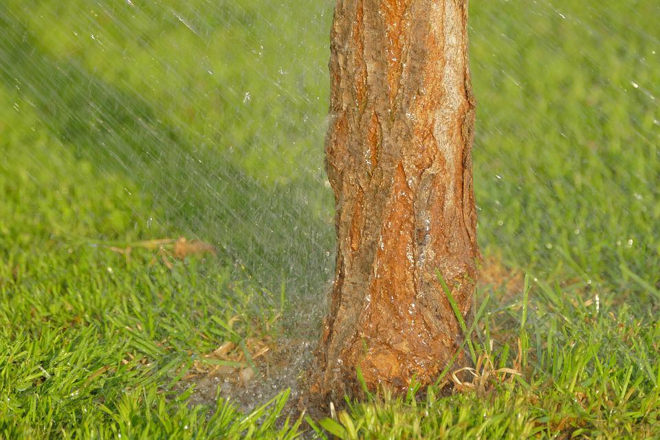 Watering, Lawn, Grass, Tribe, Tree, Garden