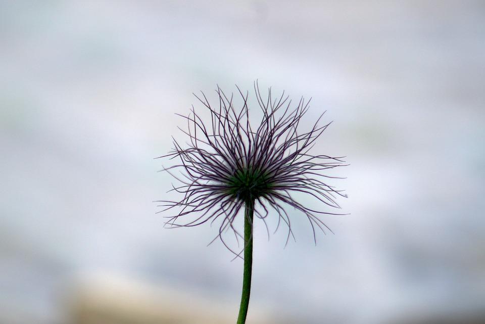 Flower, Strange, Whisk, Garden, Shaggy
