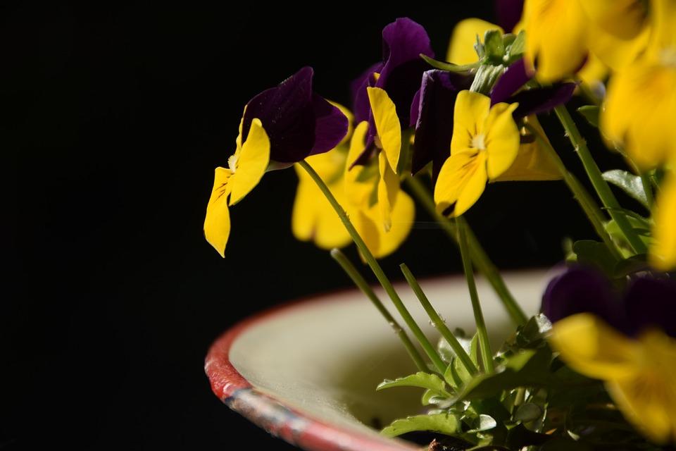 Flowers, Garden, Hellevoetsluis, Yellow, Purple