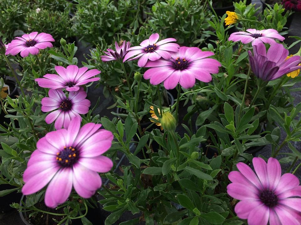 Flower, Plant, Pink Flower, Blossom, Bloom, Gardening