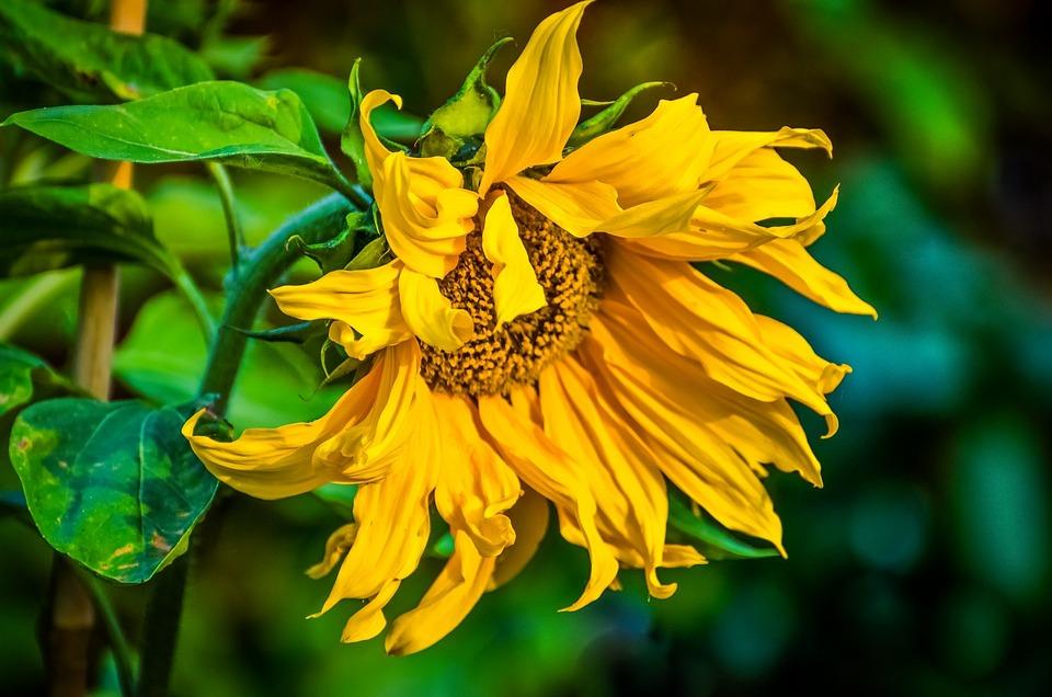 Flower, Summer, Spring, Gardening, Garden, Decoration