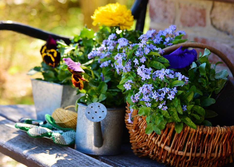Garden, Flowers, Plant Flowers, Gardening, Spring