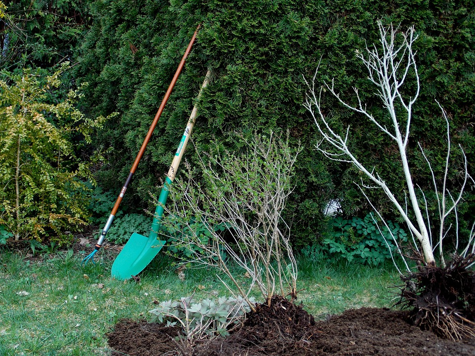 Gardening, Garden Design, Plant, Shrubs, Garden Tools