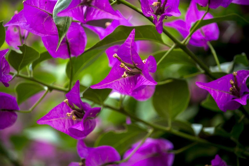 Spring, Garden, Gardening, Nature, Plants