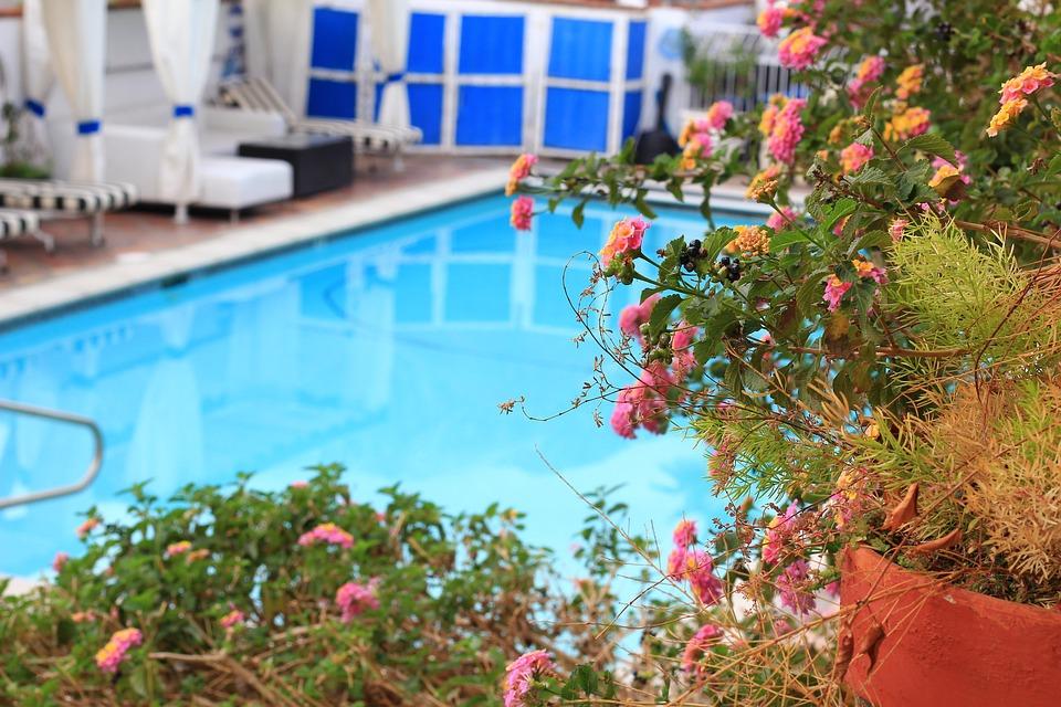 Pool, Swimming, Vacation, Hotel, Garden, Gardening