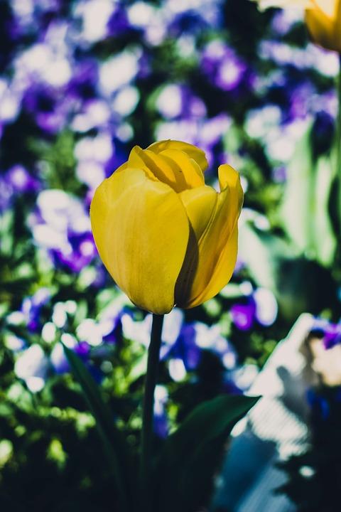 Yellow Flower, Flores, Blossom, Flower, Gardening