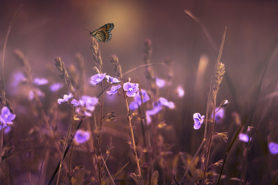 Flowers, Butterfly, Lilac, Violet, Purple, Gardens