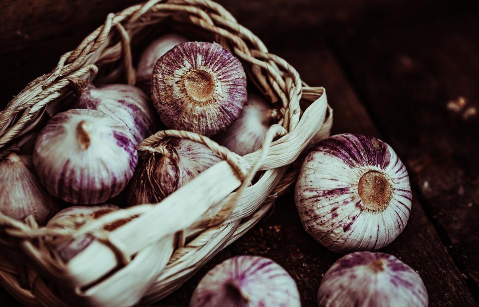 Garlic, Harvest, Tuber, Food, Vegetables, Bio
