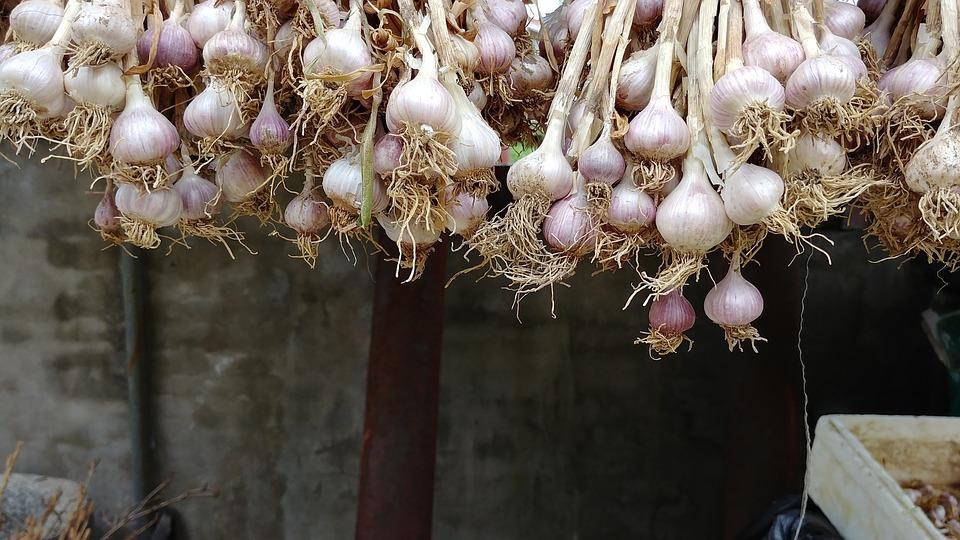 Garlic, Rural, Fruit