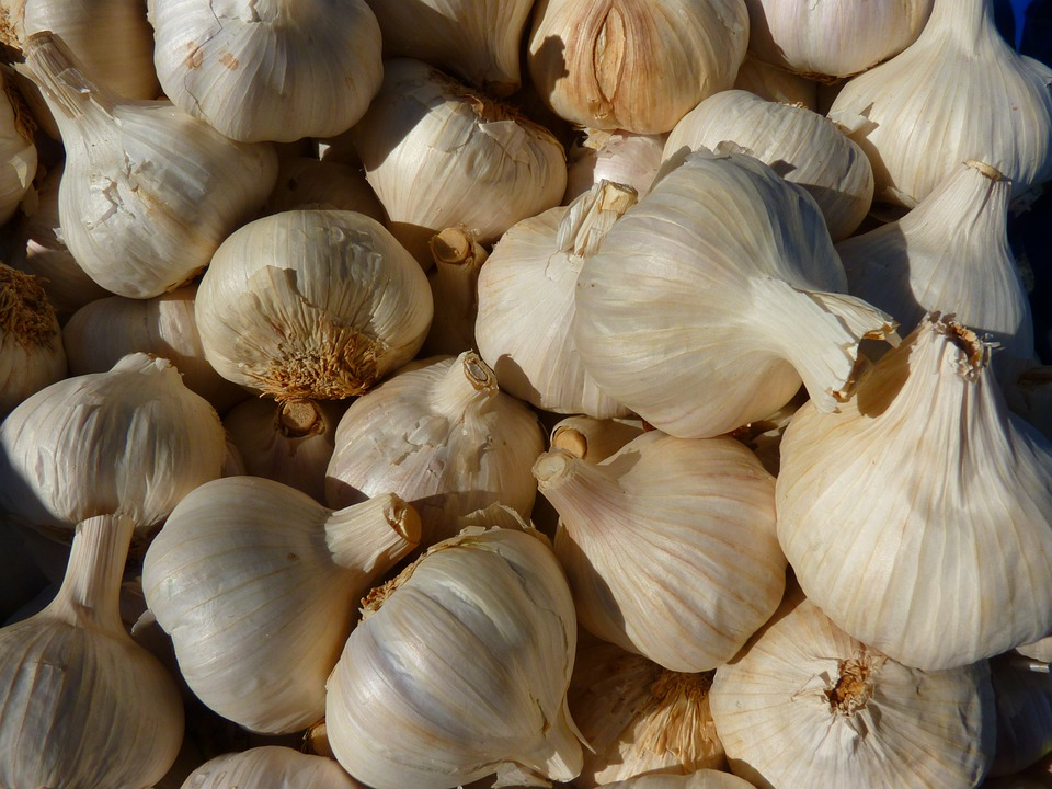 Garlic, Spice, Sharp, Medicinal Plant, Clove Of Garlic