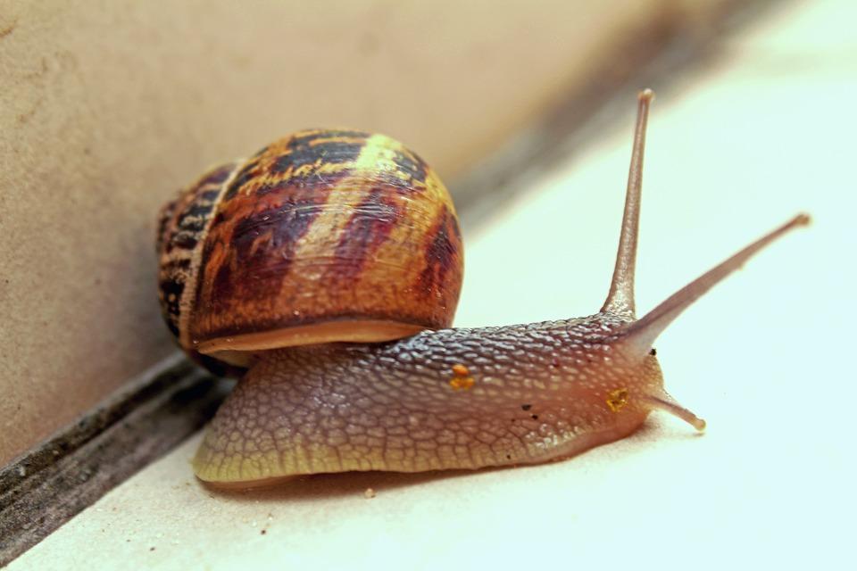 Snail, Slow, Gastropod, Seafood, Viscous, Slug